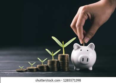 Hand puting coin on piggy bank and stacking coins.1 dollar coin.money saving concept.Plant growing on coins.
