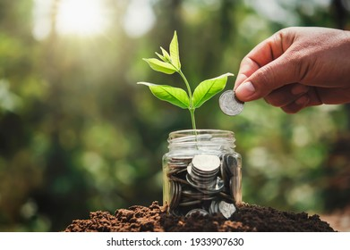 hand putting coins into jug glass with plant growing on money. concept saving finance and accounting
