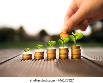 Hand putting money coins and money growing plant for finance and banking, saving money or interest increasing concept.