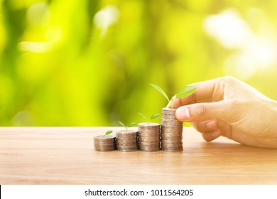 Hand putting money coins to stack of coins and growing plant on row of coin money for finance and banking. Investment and saving concept