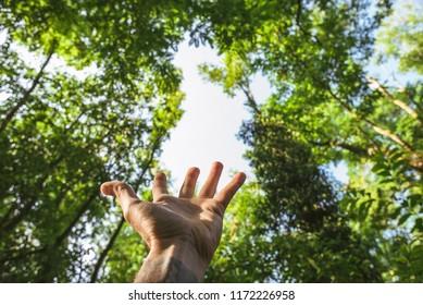 Hand reaching the nature