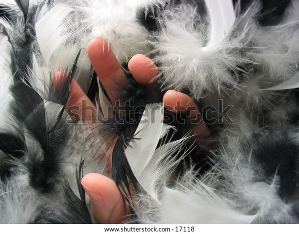 A hand reaching through a clump of fluffy black and white feathers, to represent the sense of touch.