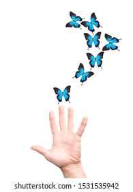 hand releases a flock of butterflies. isolated on white background
