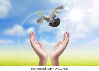Hand releasing a bird into the air  peace and spirituality freedom concept