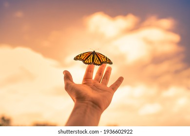 Hand releasing and freeing a butterfly into the sunrise sky. Freedom, and hope concept.