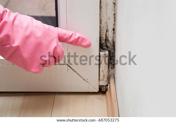 Mold Removal in Montebello
