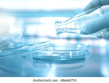 hand of scientist pouring water from flask into petri dish glass in medical science laboratory