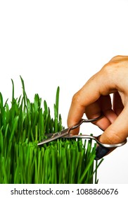 hand with scissors cutting grass isolated on white background