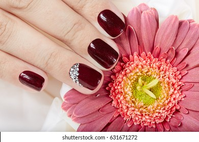 Hand with short manicured nails colored with dark purple nail polish and pink Gerbera flower