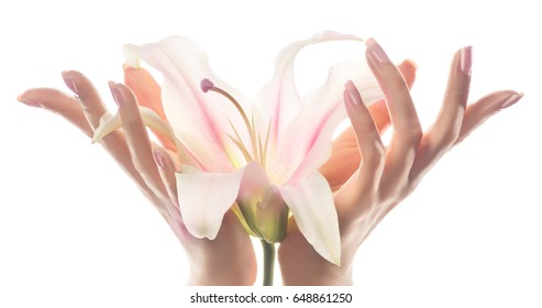 Hand skin care. Closeup of beautiful woman hands with light pink manicure on the nails. Cream for hands and treatment. Delicate Lily flower in elegant and graceful hands with slender fingers.