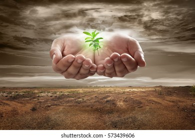 Hand from sky holding plant on soil on dry land. Climate change concept.
