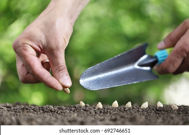 hand sowing seeds in the vegetable garden soil, close up with tool on green background