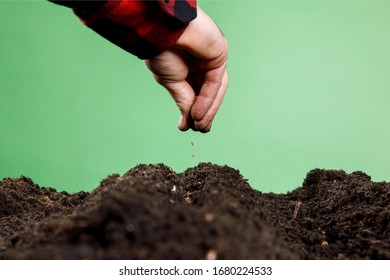Hand sowing a seeds of vegetable on healthy soil at garden , agriculture concept.