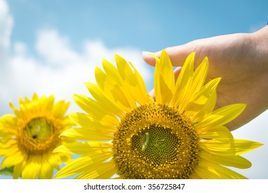 Hand and sunflower