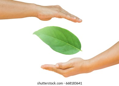 Hand surrounded by leaves on a white background.