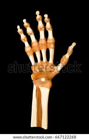 Hand Tendon Bone Human Hand Anatomy Stock Photo Edit Now 667122268