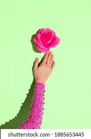 Hand mit Dornen, die eine rosa Rose halten. Minimale kreative Konzeptkunst