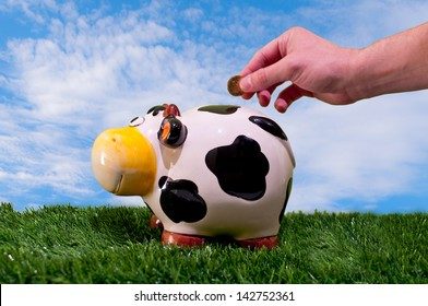 Hand throwing a coin into a piggy bank of a cow esobre fresh green grass and a blue sky and coun silky clouds