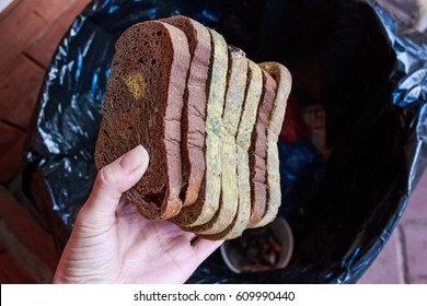 Hand throws away slices of old moldy rye bread