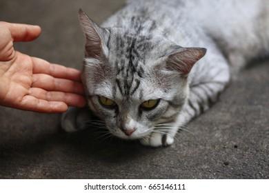 Hand touch fierce cat sleeping on concrete floor