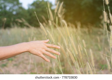 Hand touch grass on beautiful sunny day.