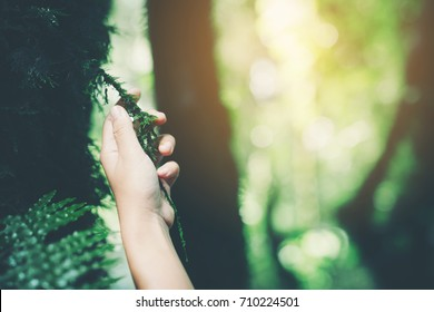 Hand touch the tree.adventure, travel, tourism,