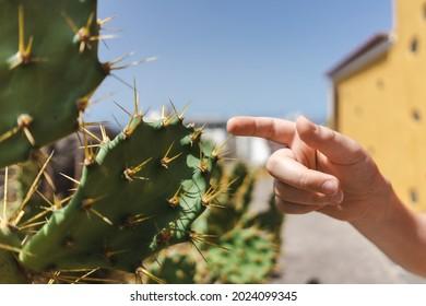 La main touche les aiguilles d'un cactus.