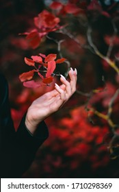 Hand touches red leaves love