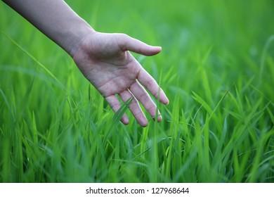 hand touching green grass.