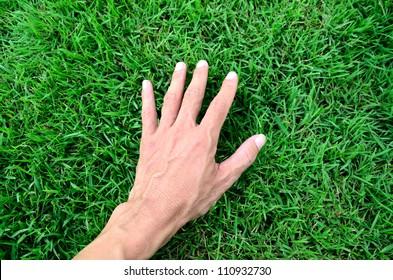 Hand touching green grass field.