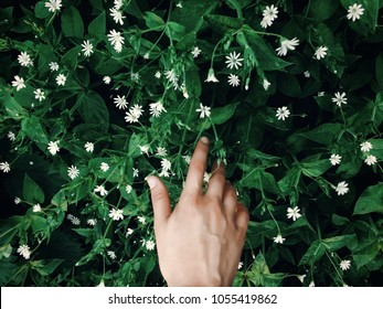 hand touching green grass with white flowers in spring park, environmental concept. earth day. save environment. eco