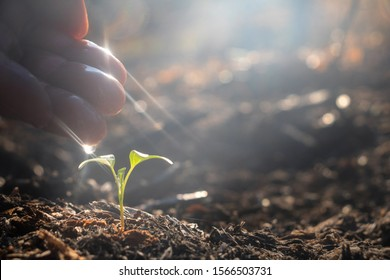 Hand touching is growing plant,Young plant in the morning light on ground background.Small plants on the ground in spring,Photo fresh and Agriculture  concept idea.