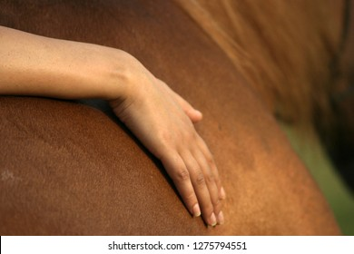 hand touching horse ,equine assisted learning