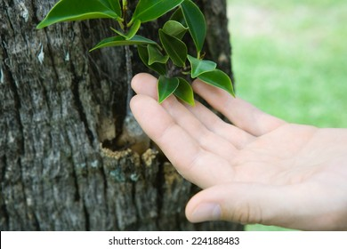 Hand touching leaves growing on tree trunk, cropped view