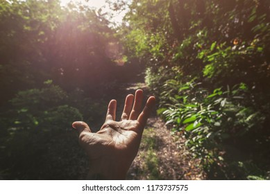 Hand touching light in the forest