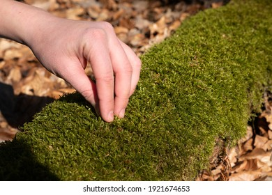 Hand touching moss in forest on trunk biology ecologist nature feel sunny spring green sustainable connected to nature