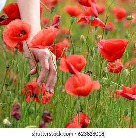 Hand touching poppy closeup