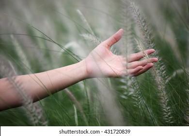 hand touching reeds grass