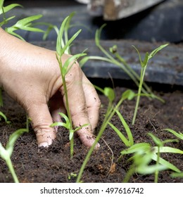 Hand is touching soil  to grow small plant
