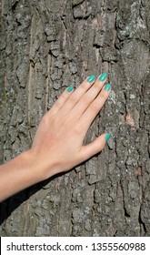 hand touching tree