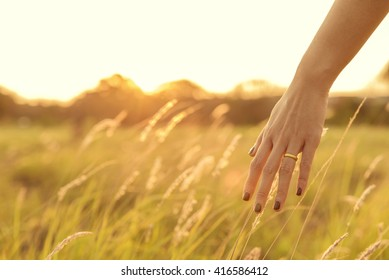 hand touching wheat spikes with her hand at sunset in meadow grass