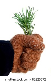 Hand with twig of pine, congratulation with Christmas and New Year, concept of ecology
