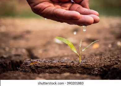 Hand watering the ground barren