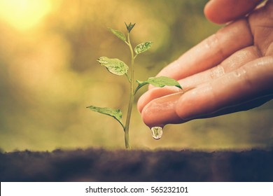 Hand watering a young baby plant growing on fertile soil with green background