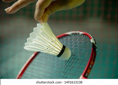 Hand of woman BADMINTON player holding racket and serving shuttlecock with blur Badminton court background. Most popular indoor sport concept.