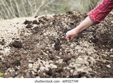 Hand of woman farmer seeding onions in organic vegetable garden, Close up of hand planting seed in soil.