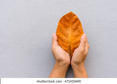 Hand of woman holding dry leaf on cement wall background.
