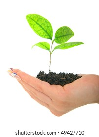 hand of a woman holding new life in form of plant. isolated on white