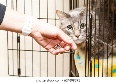 Hand of a woman petting a scared and shy cat that is lying in a cage at a shelter