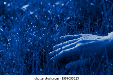 Hand of a woman touching beautiful green grass with dew drops, toned, classic blue, color of the year 2020. Tactility concept.